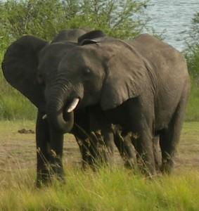 Uganda National Park Tour