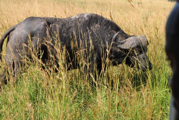Uganda Wild Tours