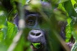 Adventure mountain Gorillas