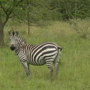 Lake Mburo Wildlife Tour