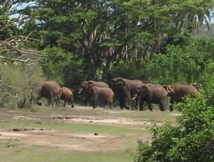 Rwanda-elephants